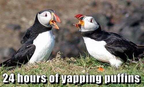 yappingpuffins